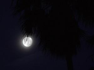 moon, ocean, beach
