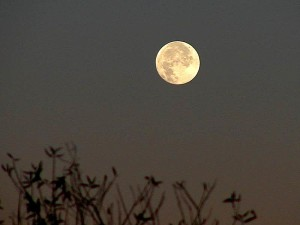 lune, presque