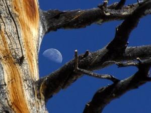mjesec, svibanj, jezero, Yosemite, park