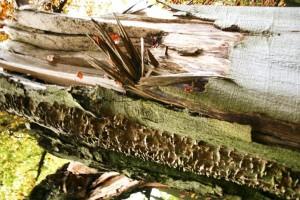 old, wood, log