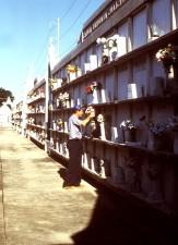 Rochs, kirkegård, Orleans, handlet, urban, beliggenhet, avl, område, aedes aegypti