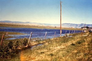 image, pooling, irrigation, tailwater, wyoming, pasture