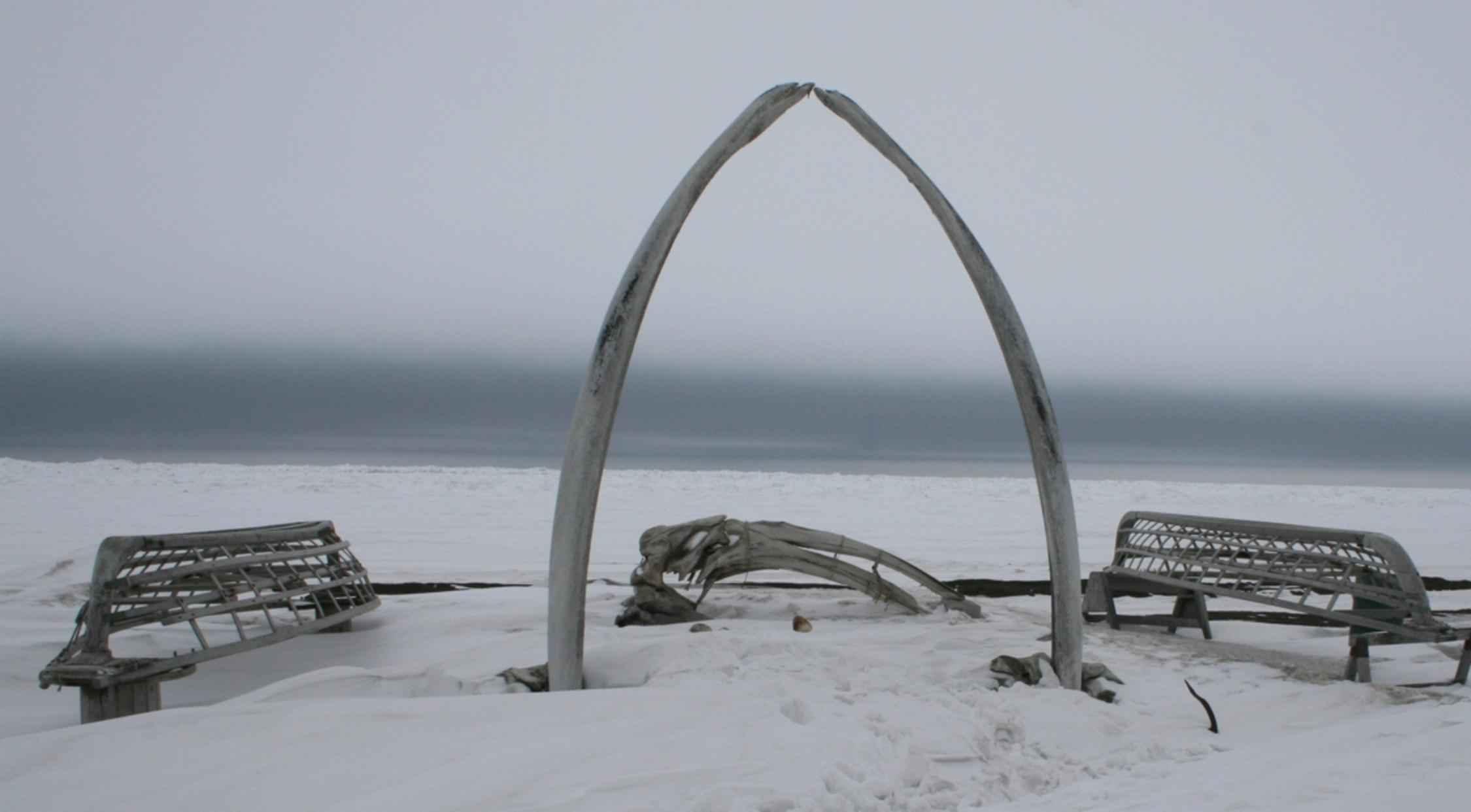Free picture: whale, bone, skin, boat, frames, barrow, Alaska