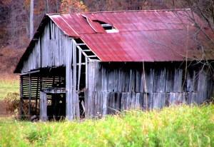 abandonné, cheval, grange, automne, chute