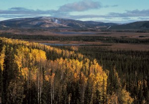 aerial, autumn, landscape