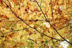 autum, leaves, wallpaper