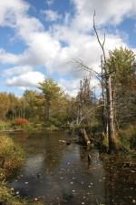 autumn, pond, scene