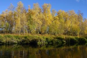 autunno, gli alberi, a specchio, acqua