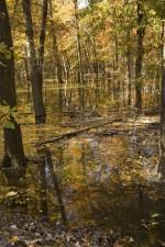 otoño, árboles, de pie, el agua