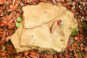 cône, pierre, feuilles
