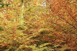 diferent, couleurs, automne