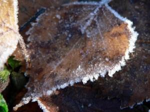 frosty, autumn