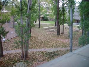 leaf, fall