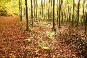 viejo, árboles, hojas, tierra, otoño