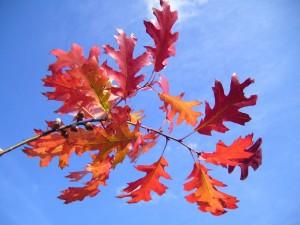 red, autumn