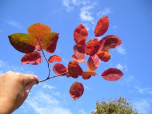 red, autumn, leaves, branch, hand