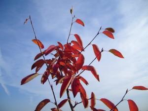 top, autumn, tree