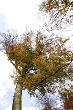 árbol, encima, otoño