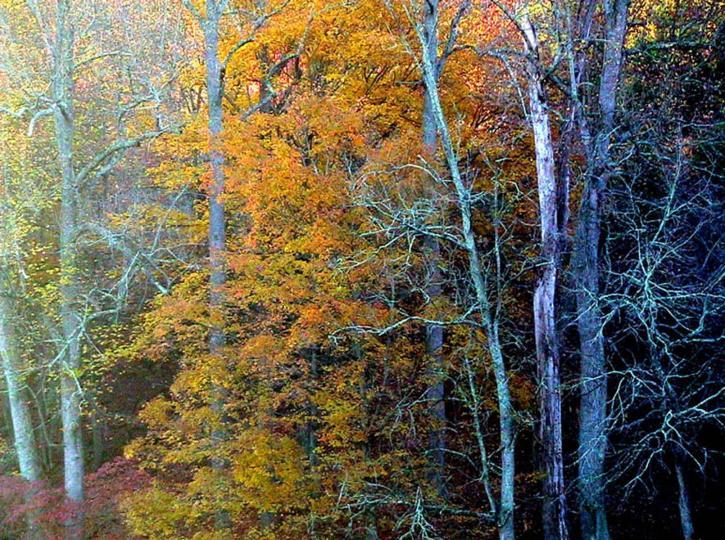 Autumn Free Images Public Domain Images