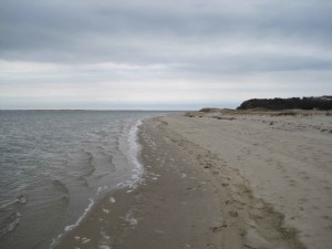 strand, Monomoy, a vadonban, a menedék, a cape