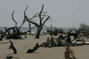 παραλία, διάβρωση, παλιά, truncks, παραλία