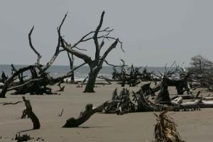 beach, erosion, old, truncks, beach