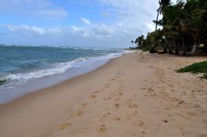 plage, jaune, sable, bois