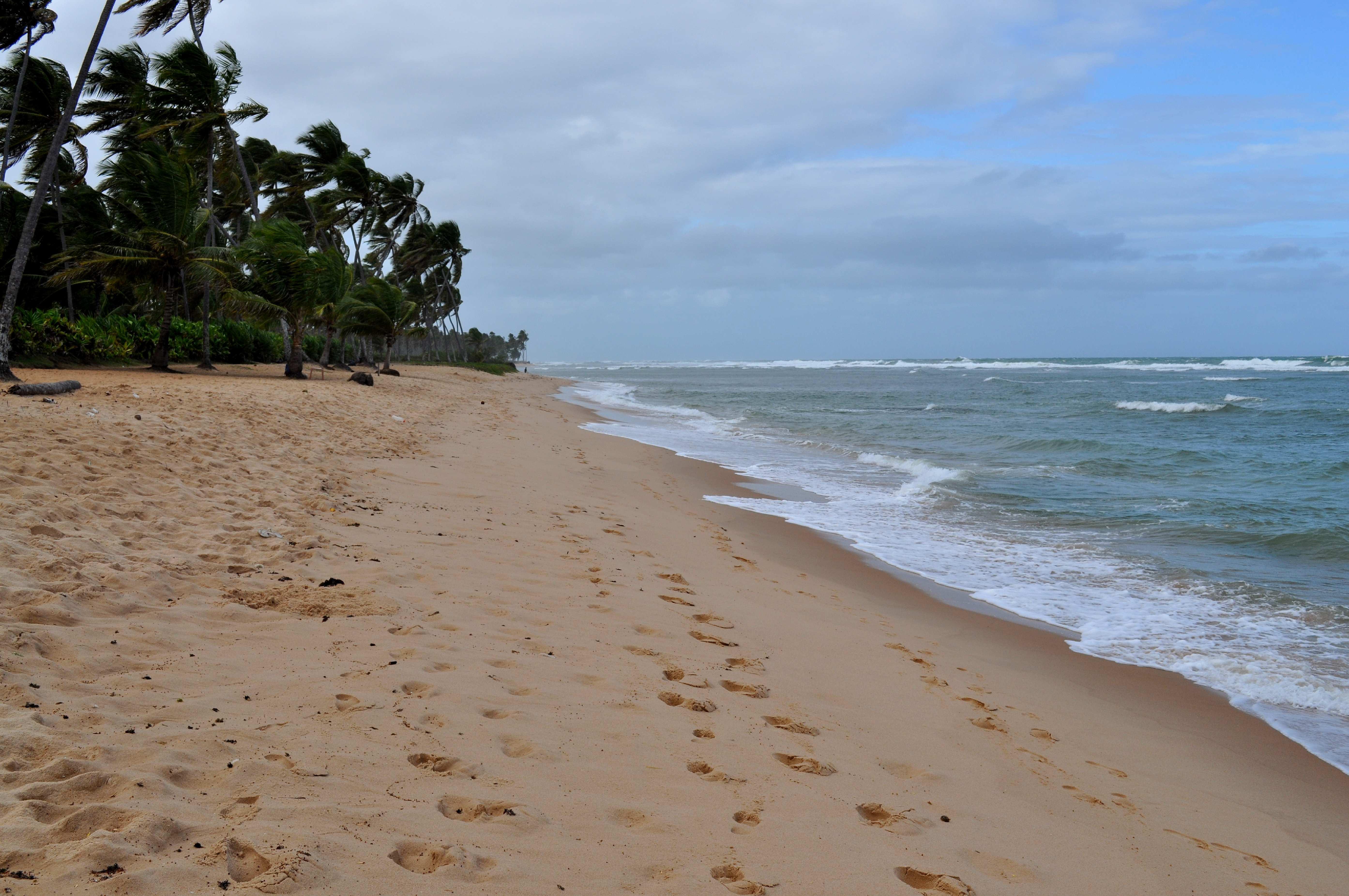 Free photograph; beach, yellow, sand