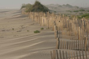 erosion, control, wooden, fence, sand