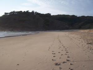 empreintes de pas, sable, herbe, tête, plage