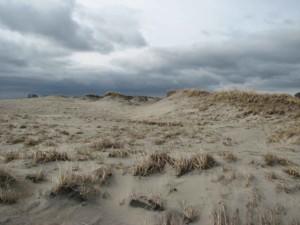 Hampton, strand, strandpipare, beach