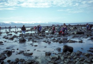 homer, seaweek, évêques, plage