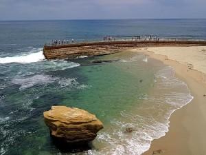 animaux, lions de mer, cosatline, plage