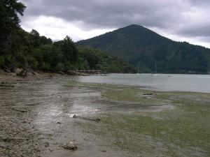 low, tide, sea, beach