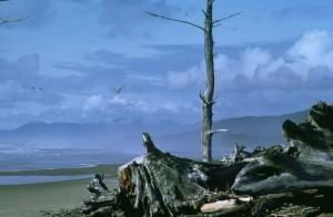 alt, morsch, Holz, Strand