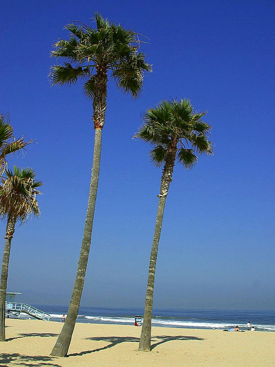 Free picture: palm trees, tropical, beach