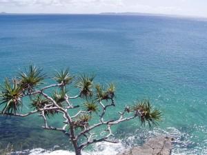тропічних дерев пандануса флори, океан, пляж