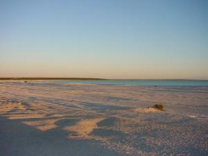 ljuske, plaže, morski pas, uvala