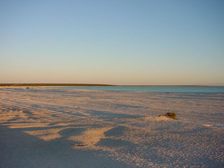 shell, beach, shark, bay