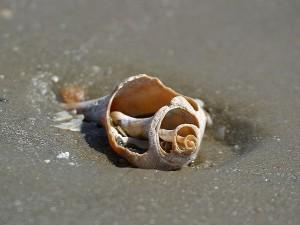 shells, sand, ocean, beach