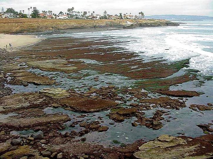tidepools, océan, plage