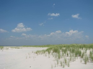 blanc sable, plage, petit, vert, herbe