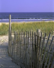 wooden, fence, beach, dune, stabilization