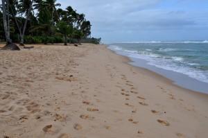 jaune, sable, plage