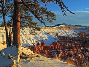 brcye, canyon, vinter, snø, furu, trær, utah