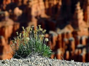 bryce, canyon, rim