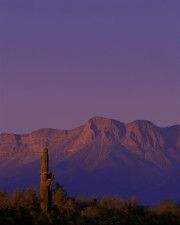 cabeza, Prieta, désert, refuge, Arizona