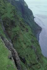 steil, Klippe, Erwachsene, niedrig, Vegetation, nisten, vögel