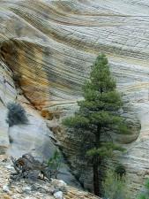 cliff, checkerboard, mesa, region, zion, national park