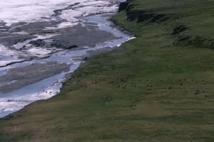 Arctique, sur la côte, les plaines